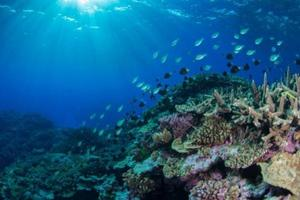 New study suggests coral reefs may be able to adapt to moderate climate change