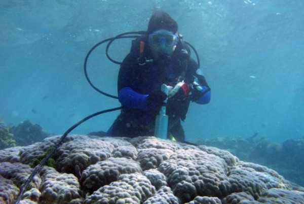 Coral skeletons tell historical tale of water pollution