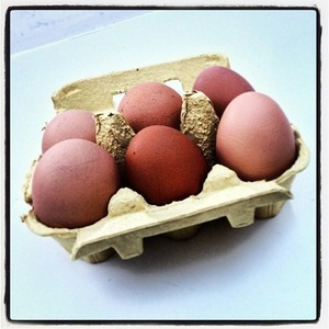 Free-range eggs - @sustmeme photo on Instagram