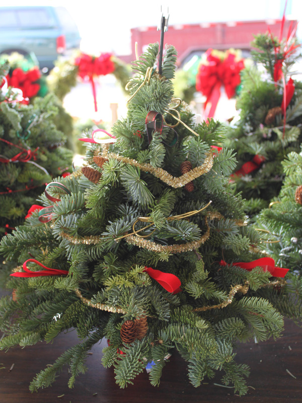 How Green Is Your Tree? Sustainable Holiday Tips  via @HuffPostGreen