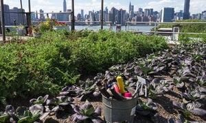 7 Ways to Reduce Toxic Soil Substances in Urban Gardens via @ecowatch