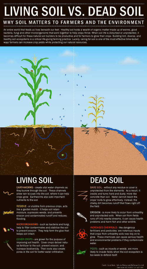 5 Signs of Healthy Soil in Honor of World Soil Day via @NRDC