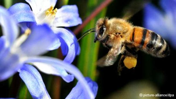 Pesticide ban to protect bees enters into force