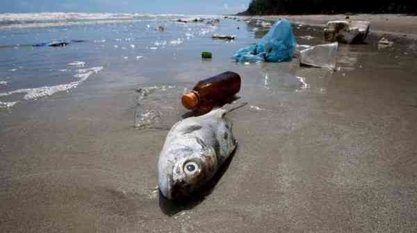 How Plastic In The Ocean Is Contaminating Your Seafood Via @nprnews