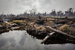 Palm oil now biggest cause of deforestation in Indonesia
