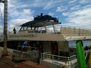 Pacific Whale Organization Maui #savetheoceans