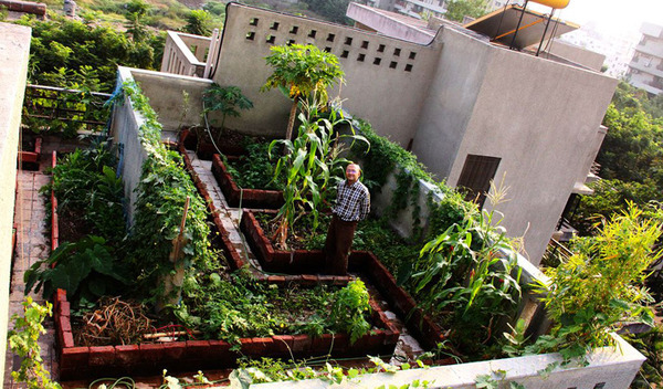 Guide to Urban Kitchen Gardening