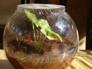 Terrarium – the magical miniature earth