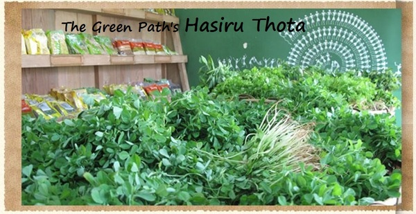 Hasiru Thota - Our latest Green Project..
