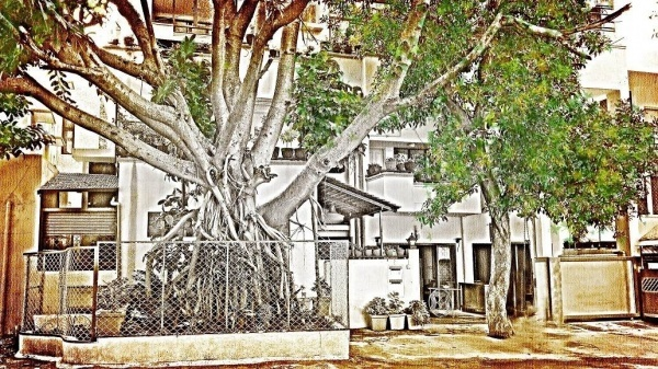 Bangalore's Greenest Homes: The Dutt's Five Seasons House