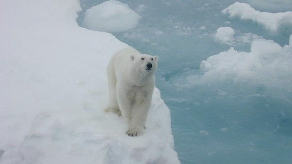 Stop Shell's Dangerous Offshore Drilling Exploration in the Arctic