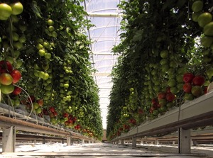 Growing food where none is possible. This is amazing.