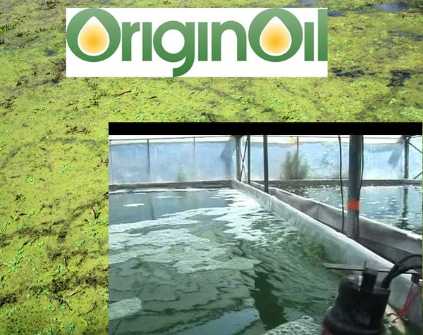 @OriginOil - Using algae to clean up oil & gas and water