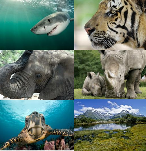 WildAid's mission is to end the illegal wildlife trade