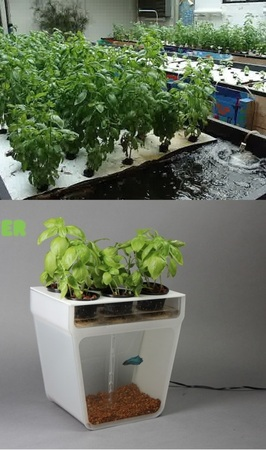 What is Aquaponics? And how to get your own Home Aquaponics Kit