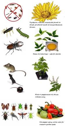 4 Natural Ways to get rid of Garden Pests