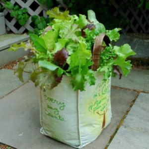 Grocery Bag Gardening