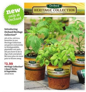 Orchard biodegradable coir pots - no waste during planting