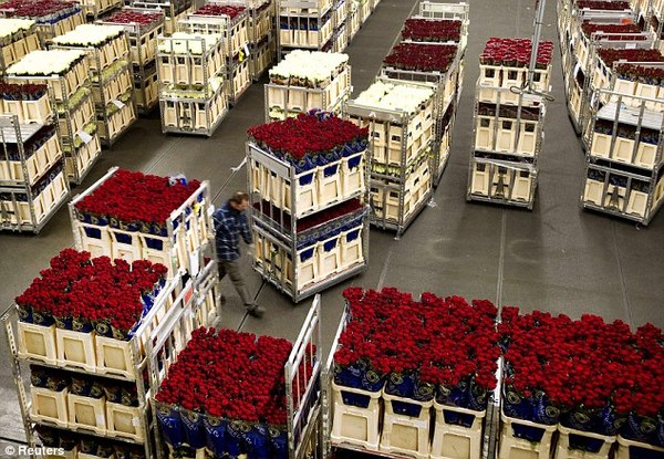 Marks and Spencer - Sustainability in delivering Roses for Valentines