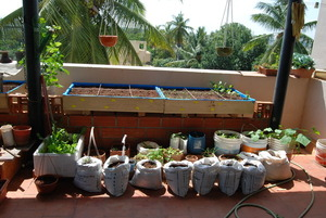 Urban farming !container gardening.