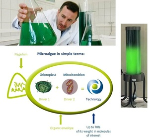 Microalgae streetlamp - light powered by algae that absorbs CO2 in the air