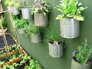 Vertical garden with soda cans