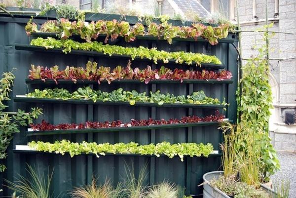 Vertical garden using gutters!