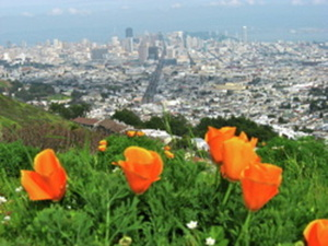 Tips and pointers on Urban Gardening in San Francisco