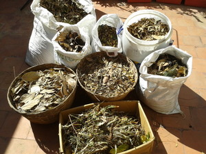 dry leaves rich resource,save and use them to compost organic kitchen waste.